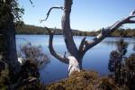 7 Tage Overland Track auf Tasmanien (Tag 7)