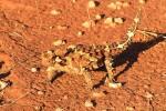 Die verrückte Tierwelt Australiens