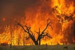 Die Buschbraende in Australien – eine Bilanz
