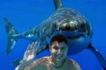 Haie in Australien: Respekt – ja, Angst – nein