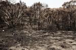 Tour durch die Buschfeuergebiete – makaber oder sinnvoll?